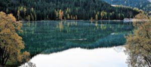 Seelandschaft in Davos mit Wald